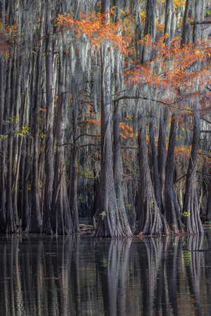 cypress swamp Rick Beldegreen