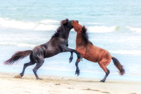 Wild Horses of the Outer Banks, NC