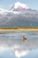 Brown bear & mountain reflections (2)