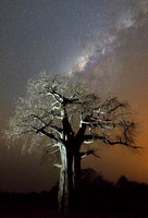 Baobab tree and Milky Way
